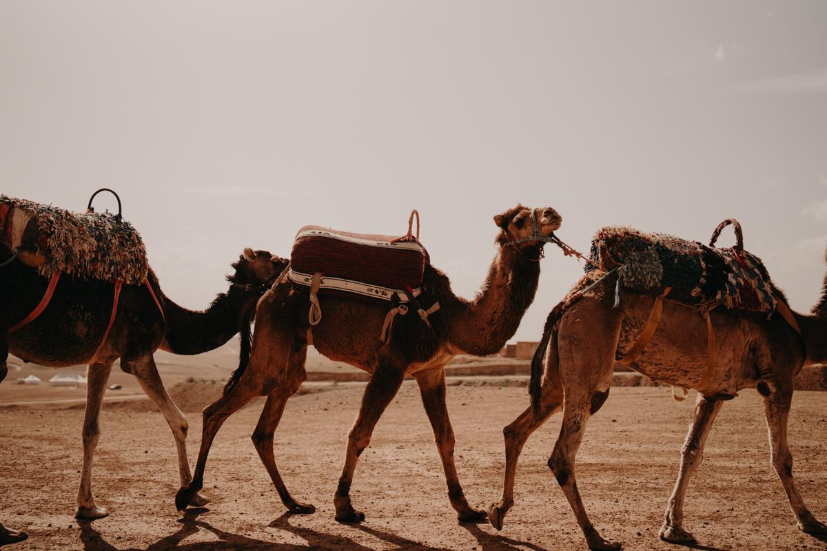 Elopement marrakech latw5 165 - Wedding - Désert d'Agafay et jardin Majorelle - Un elopement à Marrakech