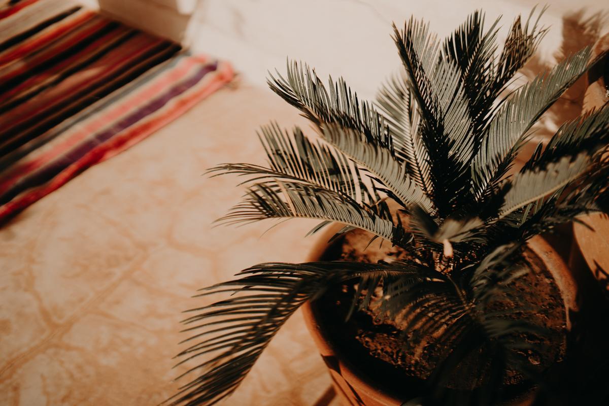 Elopement marrakech latw5 48 - Wedding - Désert d'Agafay et jardin Majorelle - Un elopement à Marrakech